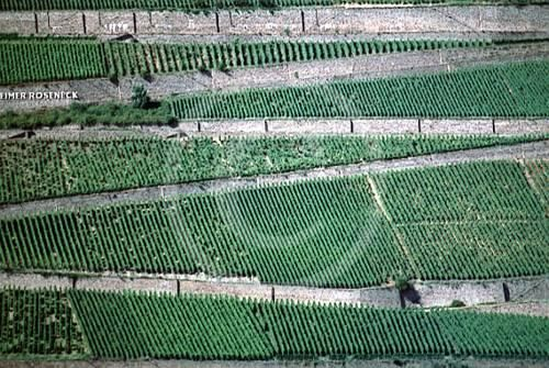 Vineyards at the Rine river - Photography ©2006 by Ditta U. Krebs -