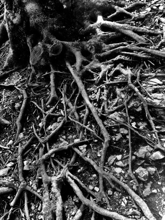 roots-radici - Photography, ©2017 by Francesca Fedeli -                                                                                                                                                                                                                                                                                              Tree, Black and White, Botanic, Mortality, Seasons, radici