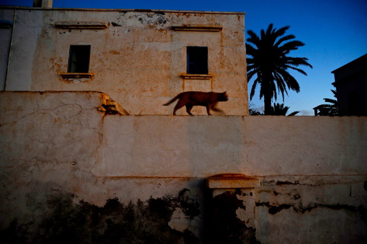 balade sur le mure - Photography, ©2019 by François Carage -                                                                                                                                                                                                      Animals, Architecture, photo couleur, chat