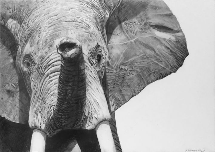 elephant mad male - quick pencil scethch - Drawing,  11.7x16.5 in, ©2020 by franzart -