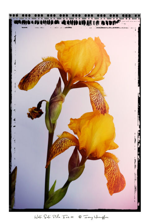 Wabi-Sabi Pola Iris 01 - Photography, ©2019 by Franz Hümpfner -                                                                                                                                                                                                                                                                                                                                                                                                                                                                                                                                              Illustration, illustration-600, Flower, Nature, Still life, Polaroid, Blumen, flower, floral, retro, color