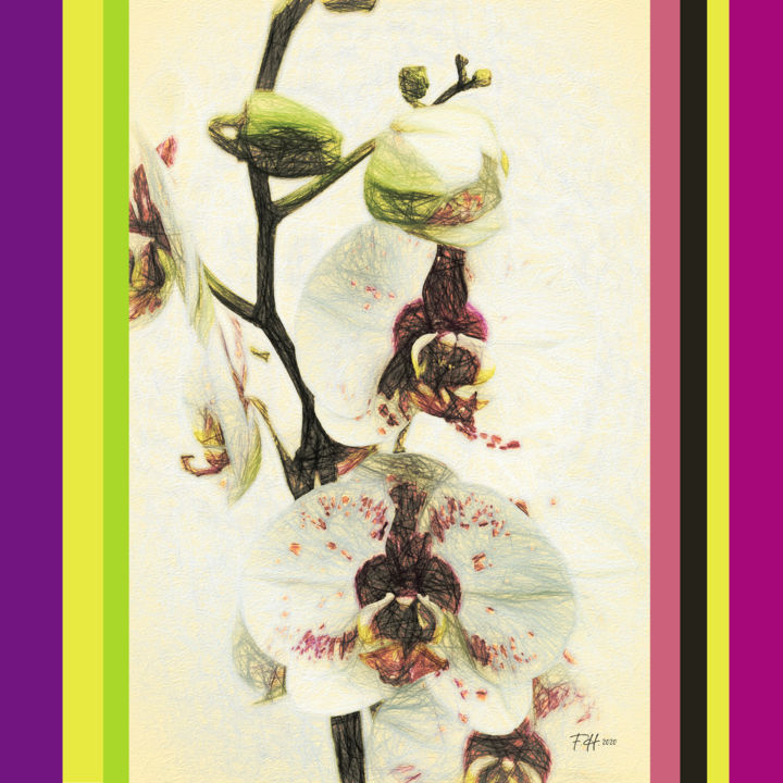 Digital Orchid 02 - Digital Arts, ©2020 by Franz Hümpfner -                                                                                                                                                                                                                                                                                                                                                                                                                                                                                                                                                                                                                                                                                  Abstract, abstract-570, Botanic, artwork_cat.Colors, Flower, Nature, Still life, flower, ordidee, orchid, digital, zeichnung, scetch, drawing