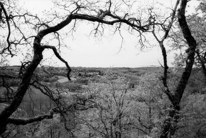Vielles branches - Photography,  7.9x11.8 in, ©2020 by Frédéric Duchesnay -