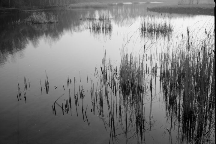 Les joncs. - Photography,  19.7x27.6x0.4 in, ©2004 by Frédéric Duchesnay -                                                                                                          mare water jonc, Black and White