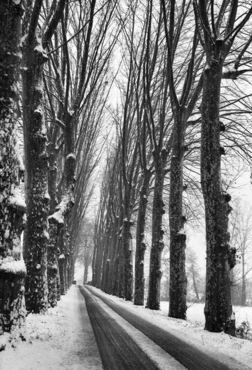 Platanes - Photography,  13.4x9.5 in, ©2010 by Frédéric Duchesnay -                                                                                                          allee de platane sous la neige, Black and White