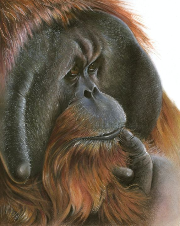 """Drawing titled """"Man of the Jungle"""" by Geraldine Simmons, Original Art, Pencil"""