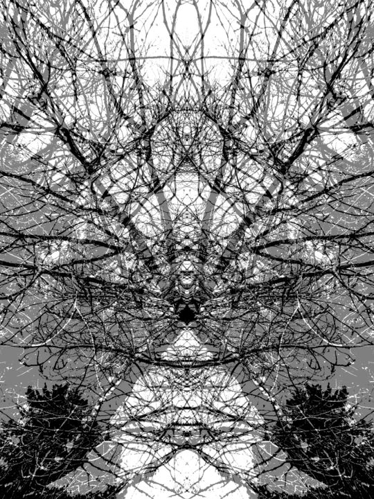 Diagonals - ©  tree, abstract, digital manipulation Online Artworks