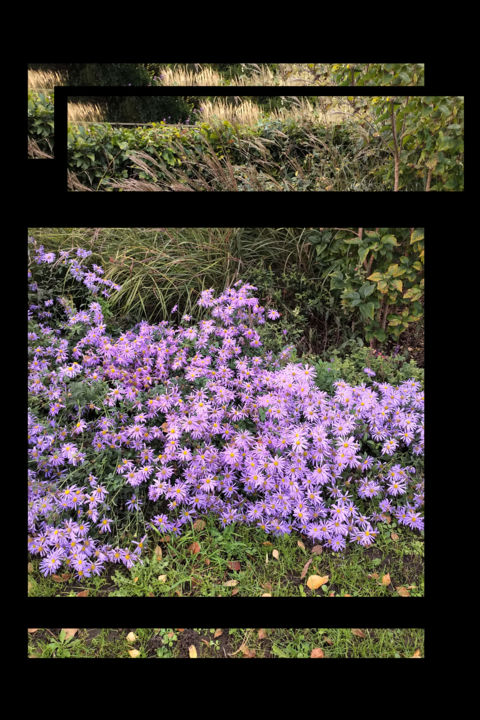 Experimenting With A Recording - © 2020 digital manipulation, image editing, aster, flower garden Online Artworks