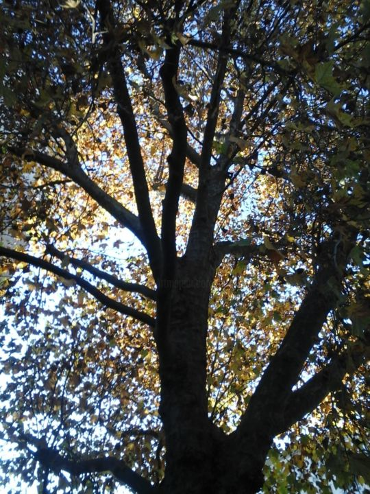 Autumn tree - Photography, ©2015 by Pictures from GI ART -                                                                                                                                                                                                                                                                                                                                                                                      Tree, Nature, Seasons, autumn, tree, nature, sky, foliage
