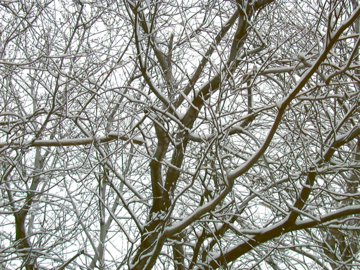 Branches Hiver Québécois3.jpg - Photography ©2006 by Gilbert Laporta -                                            Figurative Art, Tree, Branche, Froid, Froidure, Neige