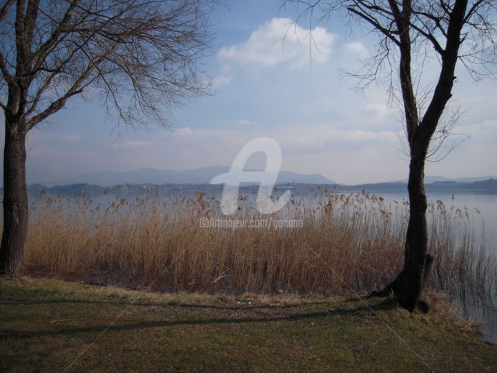 vegetazione-lago-di-pusiano.jpg - Photography ©2015 by bruno -                                                            Documentary, Paper, Places, riflessione
