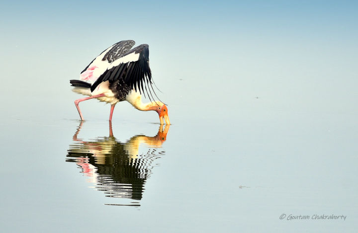 In search of Breakfast! - Photography, ©2020 by Goutam Chakraborty -                                                              Goutam Chakraborty Photography