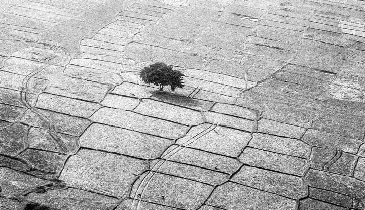 """Photography titled """"The Lone Tree!"""" by Goutam Chakraborty, Original Art, Digital Photography"""