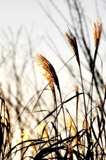 """Photography titled """"Dawning Light"""" by Gracey, Original Art,"""