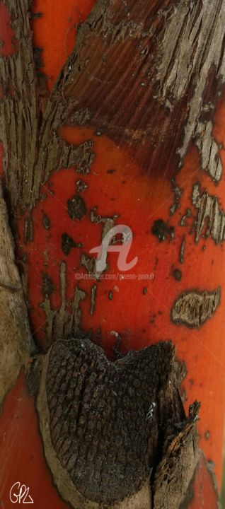 Ecorces - 4 - Rouge - Photography, ©2015 by Gwenn Pinault -                                                                                                                                                                                                                                                  Tree, Abstract Art, Nature, Rouge, Abstraction