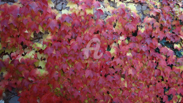 """Photography titled """"Nature in Pink"""" by Harpreet Kaur, Original Art,"""