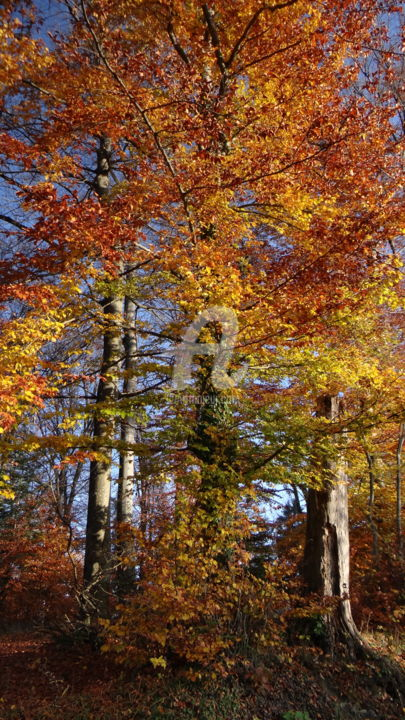 """Photography titled """"Colorful Trees"""" by Harpreet Kaur, Original Art,"""