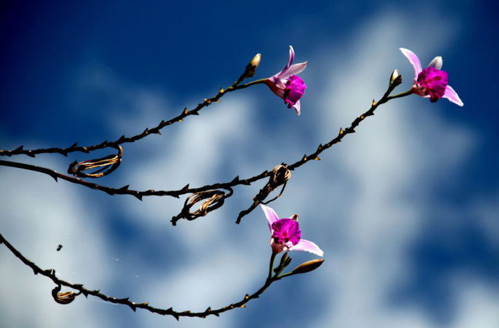 Wild orchids - Photography ©2012 by Heart Art Rebecca -