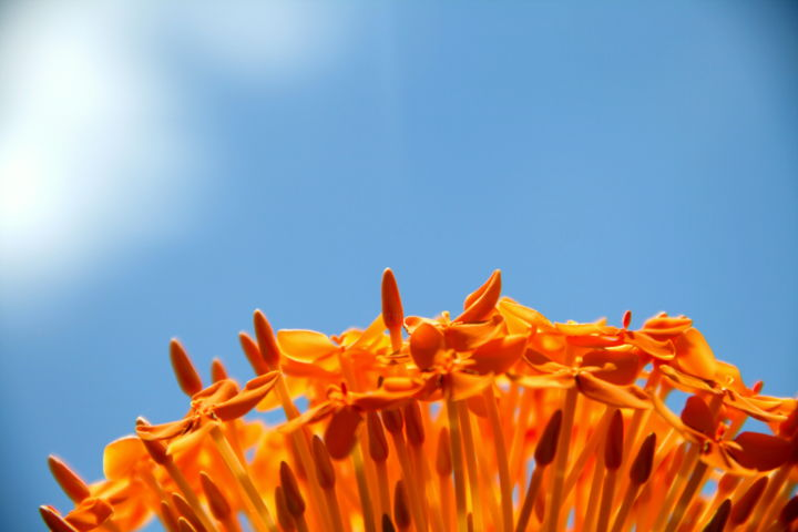 Orange - Photography ©2012 by Heart Art Rebecca -