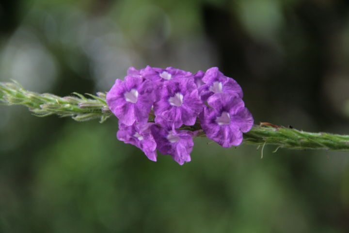 Green and Purple - Photography ©2012 by Heart Art Rebecca -