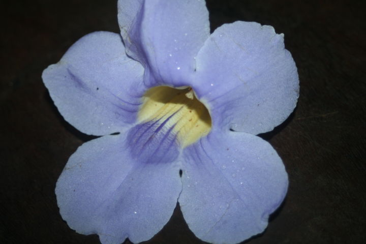Violet blue - Photography ©2009 by Heart Art Rebecca -