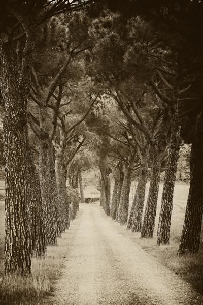 """Photography titled """"Country lane in Tus…"""" by Hugh Smith, Original Art,"""