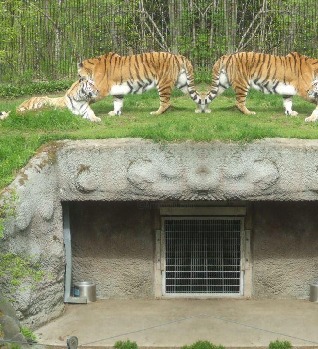 """Photography titled """"mirrored-tigers-r.j…"""" by Iceland, Original Art, Digital Photography"""