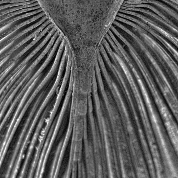 Palm tree 3 - Photography, ©2017 by Isabelle Stagg -                                                                                                                                                                                                                                                                                                                                              Other, Tree, palm tree, leaf, pattern, texture, Black and White