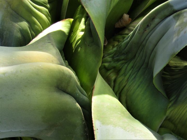 agave 4 (isabelle stagg)