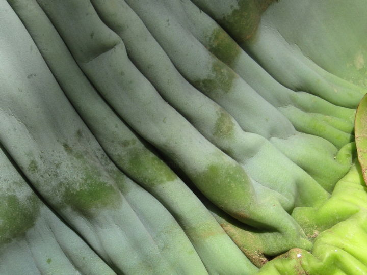agave 12 (isabelle stagg)