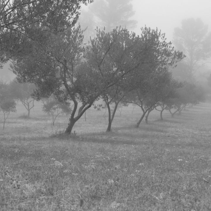 Olive grove in morning mist - Photography, ©2017 by Isabelle Stagg -                                                                                                                                                                                                                                                                                                                                                                                                                                                                                                                                                  Figurative, figurative-594, Other, Landscape, Rural life, Tree, olive grove, mist, black and white photograph, Provence, Black and White