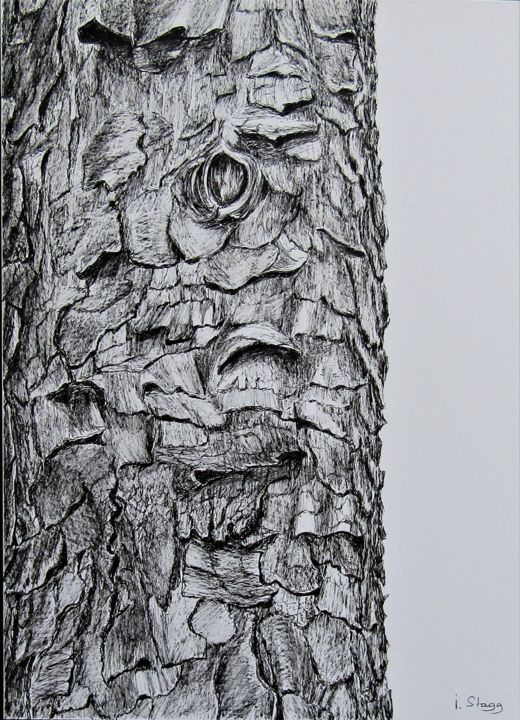 pin-maritime.jpg - Drawing,  15.8x12.6 in, ©2017 by Isabelle Stagg -                                                                                                                                                                                                                                                                                                                                                                                                          Figurative, figurative-594, Botanic, Nature, Tree, dessin a l'encre, pin maritime, ecorce