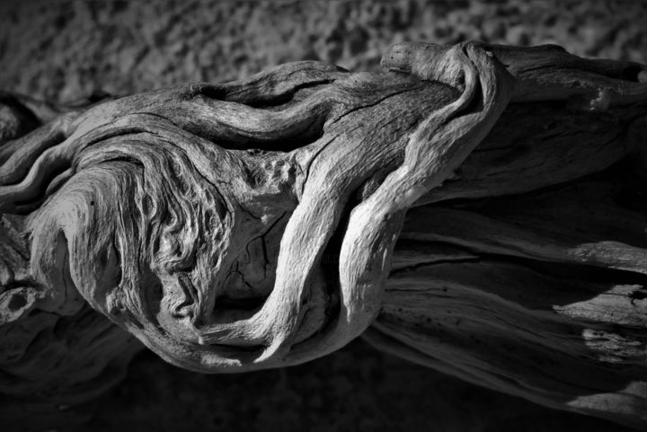romarin.jpg - Photography, ©2017 by Isabelle Stagg -                                                                                                                                                                                                                                                                                                                                                                                                                                                                                                                                                  Figurative, figurative-594, Other, Nature, Patterns, Tree, Rosemary, wood texture, pattern, black and white, Black and White