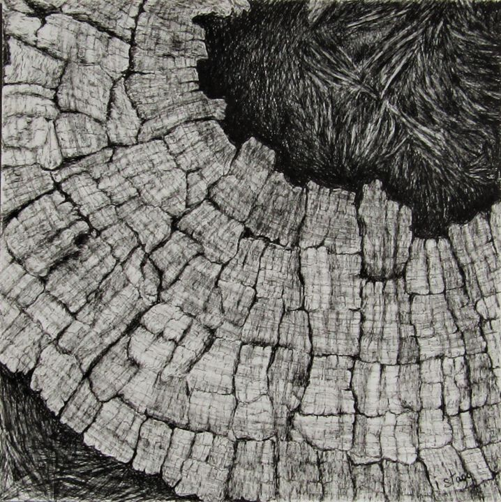 East wedge - Drawing,  9.5x9.5 in, ©2018 by Isabelle Stagg -                                                                                                                                                                                                                                                                                                                                                                                                                                                                                                                                                                                          Figurative, figurative-594, Black and White, Botanic, History, Nature, Tree, Olive wood, ink drawing, textures, souche d'Olivier, dessin a l'encre
