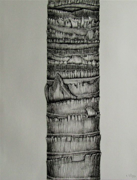 Tronc du palmier de la reine/Queen's Palm bark - Drawing,  25.6x19.7 in, ©2018 by Isabelle Stagg -                                                                                                                                                                                                                                                                                                                                                                                                                                                      Hyperrealism, hyperrealism-612, Black and White, Botanic, Nature, Tree, Queen's palm, ink drawing, botanic