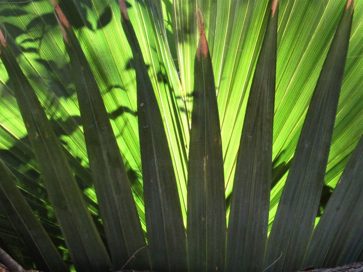 Palm leaves 1 - Photography ©2019 by Isabelle Stagg -                                                                                                                                                Abstract Art, Contemporary painting, Environmental Art, Realism, Aluminum, Abstract Art, Botanic, Colors, Garden, Light, palm tree, leaves, abstract composition, vegetal, Provence