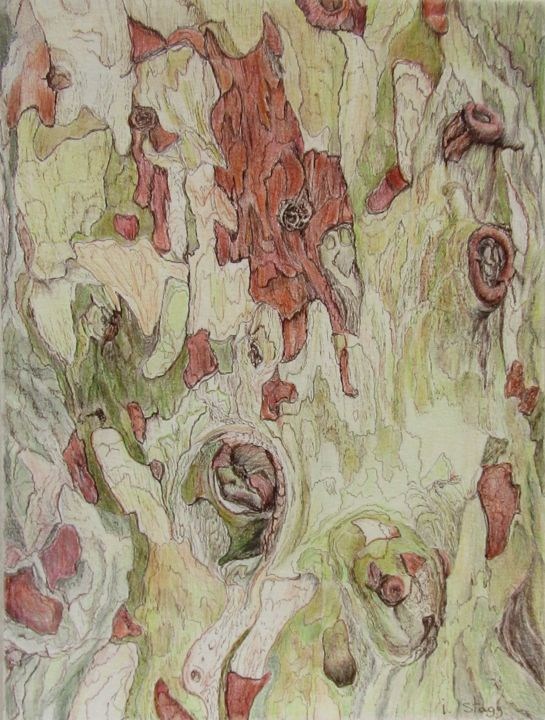 Ecorce de Platane/ platane bark - Drawing,  24x32 cm ©2019 by Isabelle Stagg -                                                                                                                        Environmental Art, Illustration, Realism, Paper, Botanic, Garden, Nature, Tree, tree bark, colours, textures, drawing, Provence