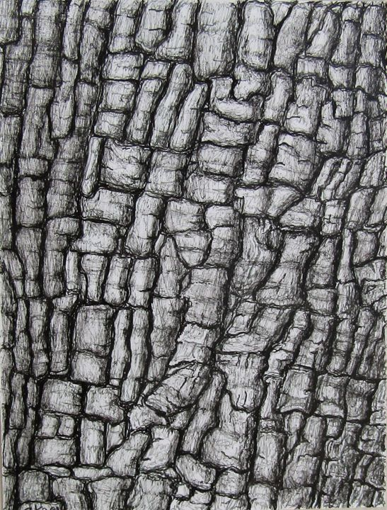 Invincible - Drawing,  6.3x4.7 in, ©2019 by Isabelle Stagg -                                                                                                                                                                                                                                                                                                                                                                                                                                                                                                                                                                                                                                                                                  Abstract, abstract-570, Abstract Art, Black and White, Botanic, Garden, Nature, bark, ink drawing, oak, textures, black and white, chene, ecorce