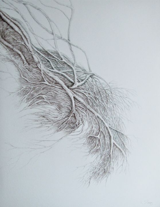 WWW... - Drawing,  25.6x19.7 in, ©2019 by Isabelle Stagg -                                                                                                                                                                                                                                                                                                                                                                                                                                                      Conceptual Art, conceptual-art-579, Botanic, Nature, Tree, roots, botanical, movement, organic