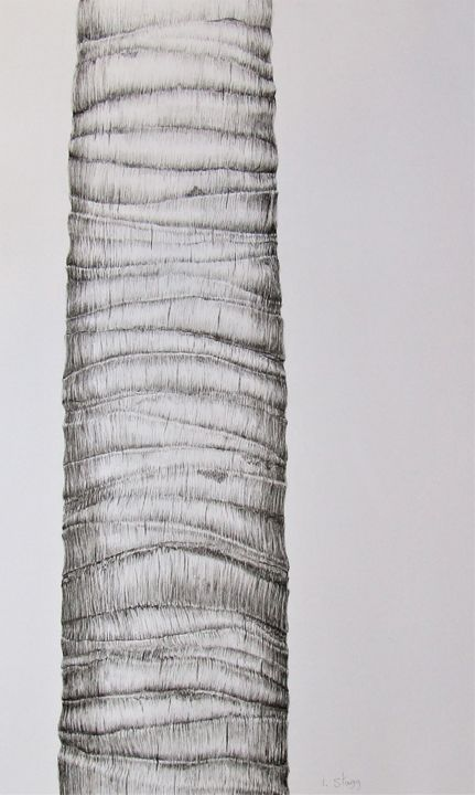 Palm V - Drawing,  25.6x15.4 in, ©2019 by Isabelle Stagg -                                                                                                                                                                                                                                                                                                                                                                                                                                                                                                                                                                                          Illustration, illustration-600, Black and White, Botanic, Nature, Tree, Bark, Palm tree, Provence, ink drawing, textures, environmental