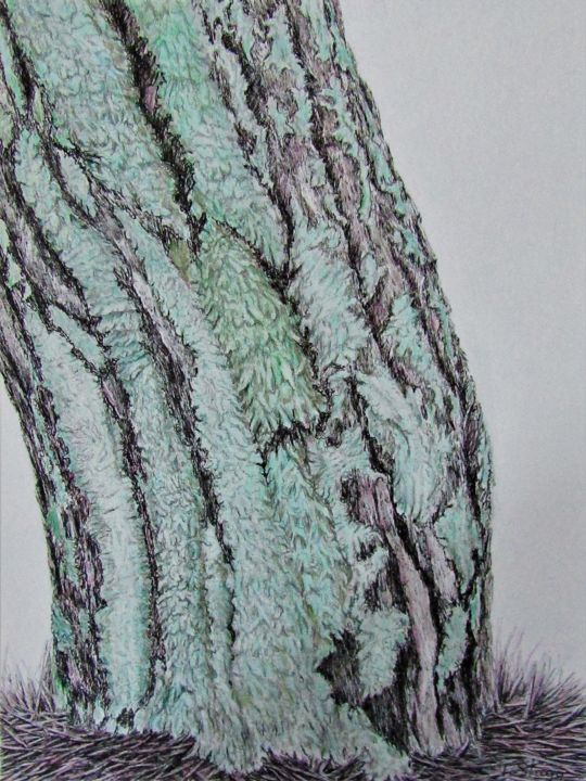 Lichens - Drawing,  12.6x9.5 in, ©2020 by Isabelle Stagg -                                                                                                                                                                                                                                                                                                                                                                                                                                                                                                                                                                                          Illustration, illustration-600, Botanic, Landscape, Nature, Tree, Lichen, Pine tree, bark, woods, colours, textures