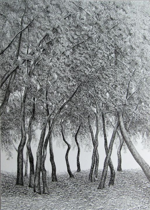 Chênes et pins IV/ Oaks and Pines IV - Drawing,  27.6x19.7 in, ©2020 by Isabelle Stagg -                                                                                                                                                                                                                                                                                                                                                                                                                                                                                                                                              Illustration, illustration-600, Black and White, Botanic, Landscape, Tree, Woods, forest, trees, Provence, landscape