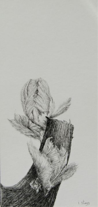 Bud I - Drawing,  16.5x7.9 in, ©2020 by Isabelle Stagg -                                                                                                                                                                                                                                                                                                                                                                                                                                                                                                  Illustration, illustration-600, Agriculture, Black and White, Botanic, Vines, bud, bourgeon, vigne, cep