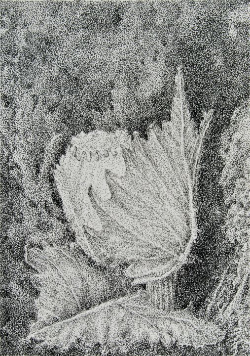 Bud III - Drawing,  9.5x6.7 in, ©2020 by Isabelle Stagg -                                                                                                                                                                                                                                                                                                                                                                                                                                                                                                                                                                                                                                                                                  Illustration, illustration-600, Agriculture, Black and White, Botanic, Nature, Vigne, bourgeon, encre, vine, cep, bud, agriculture, Provence