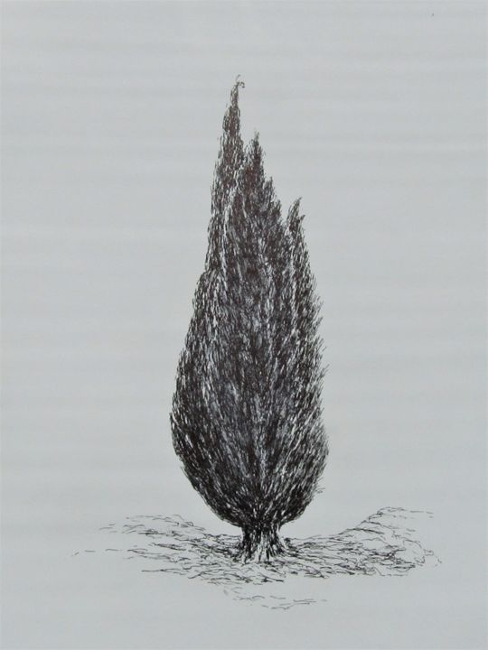 Cypress 3 - Drawing,  16.5x11.8 in, ©2017 by Isabelle Stagg -                                                                                                                                                                                                                          Illustration, illustration-600, Tree, Cypress 3
