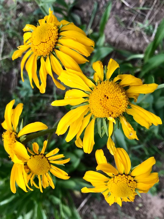"""Photography titled """"Yellow Wildflowers"""" by Igzotic, Original Art, Digital Photography"""