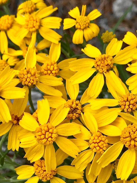 """Photography titled """"Golden Wildflowers"""" by Igzotic, Original Art, Digital Photography"""