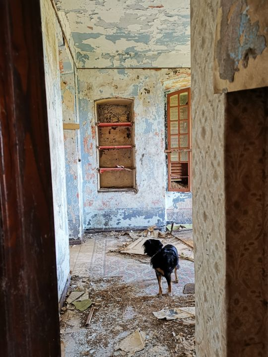 Abandon nostalgie - Photography ©2019 by Isabelle Pautrot -                                                                                                        Environmental Art, Abstract Art, Architecture, Dogs, Colors, History, Time, Urbex, abandon, abandoned house, dog, corse, Nostalgie