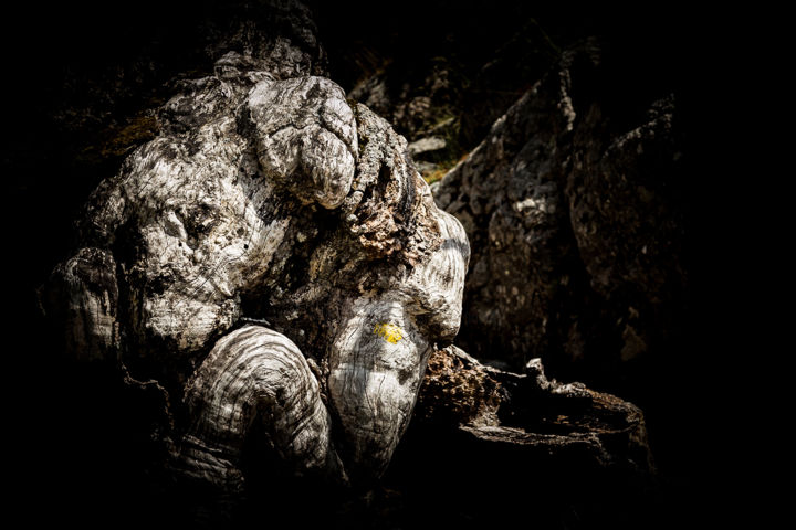 Troll Corse - Digital Arts, ©2015 by Isabelle Pautrot -                                                                                                                                                                                                                                                                                                                                                                                                                                                                                                                                                                                                                                                                                      Abstract, abstract-570, Aluminum, Paper, Tree, Nature, Fantasy, sculpture, insolite, pareidolie, anthropomorphisme, souche, Thérianthropie, Virtual World