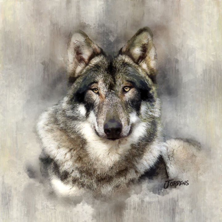 2018-8-28-wolf-2.jpg - Digital Arts,  50x50x2 cm ©2018 by Jacques Jordens -                                                        Figurative Art, Canvas, Animals